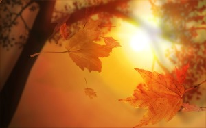 beautiful-autumn-leaves